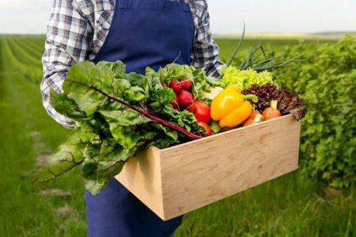 سبزیجات در غذای نوزاد 6 ماهه